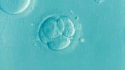 , In-vitro krok po kroku, Naturalna Płodność