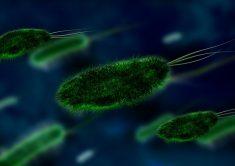 , Półpasiec: Co to za choroba? Kto jest najbardziej narażony i jak leczyć?, Naturalna Płodność